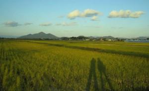 近江八幡を望む田園